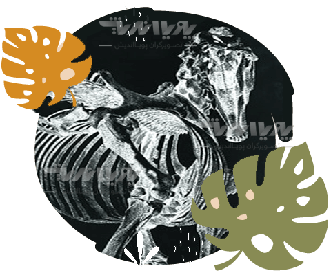 نمونه تیرگی و روشنی در تصویرسازی حیوانات